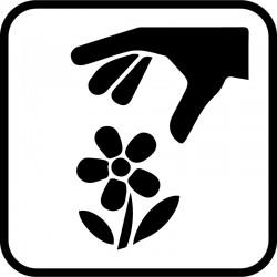 Blomstpluk