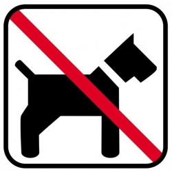 Hund ikke tilladt
